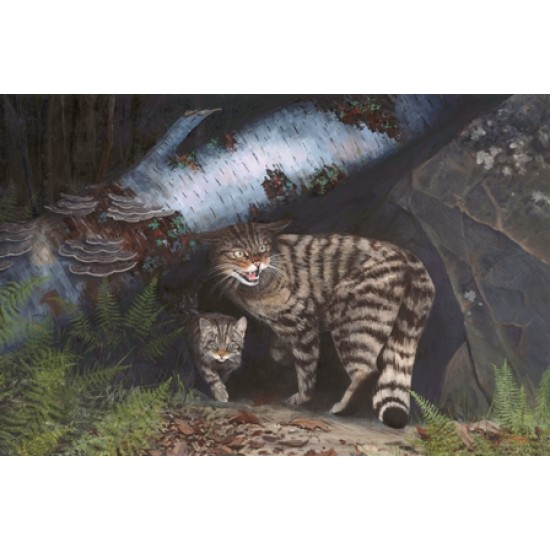 Mother Care ( Wildcat )
