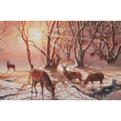 Red Deer Sunrise