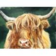 A highland portrait